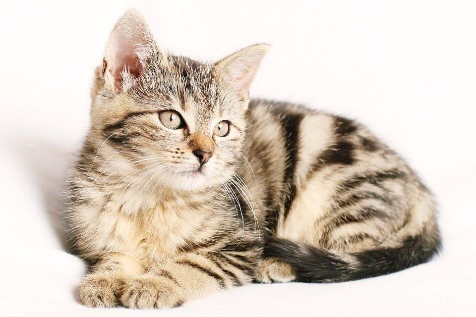 Schwedisches Katzenfutter