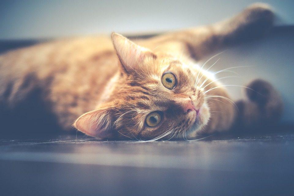 Das richtige Katzenfutter finden