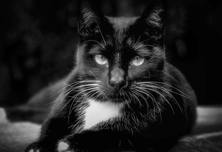 animonda Katzenfutter ohne Getreide kaufen