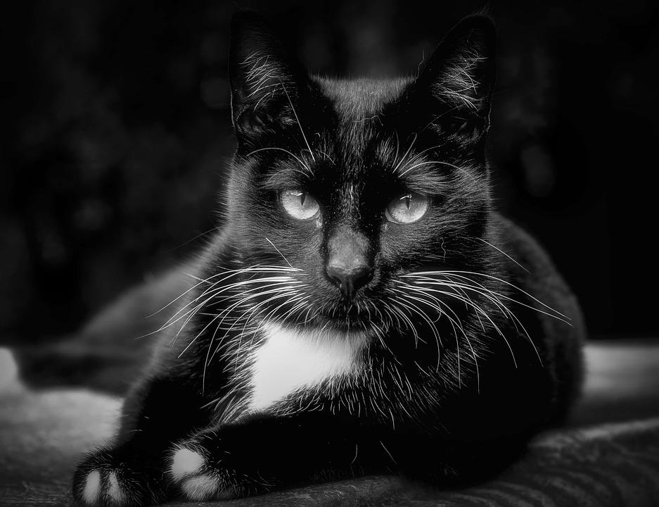 Katzenfutter getreidefrei