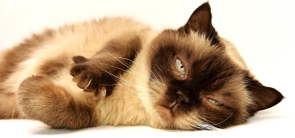 Diabetes Katzenfutter