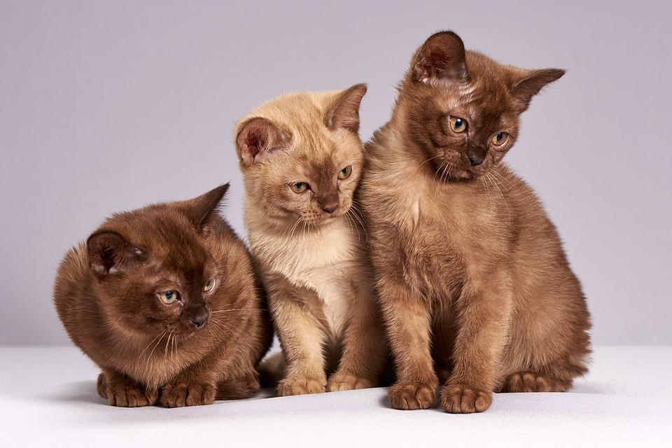 was dürfen katzen essen?