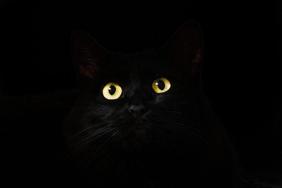 Warum Katzenfutter ohne Zucker?