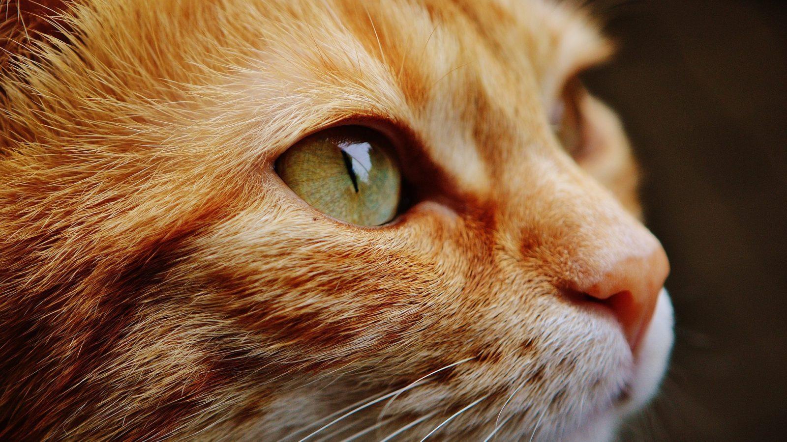 Spezialfutter für Katzen