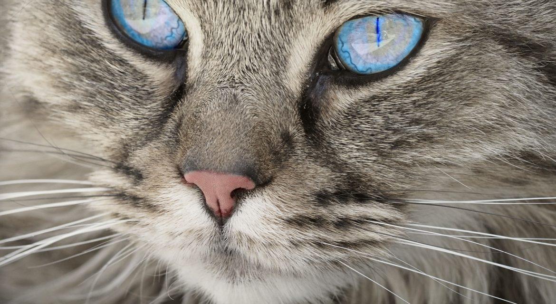 Bio Katzenfutter aus Bayern