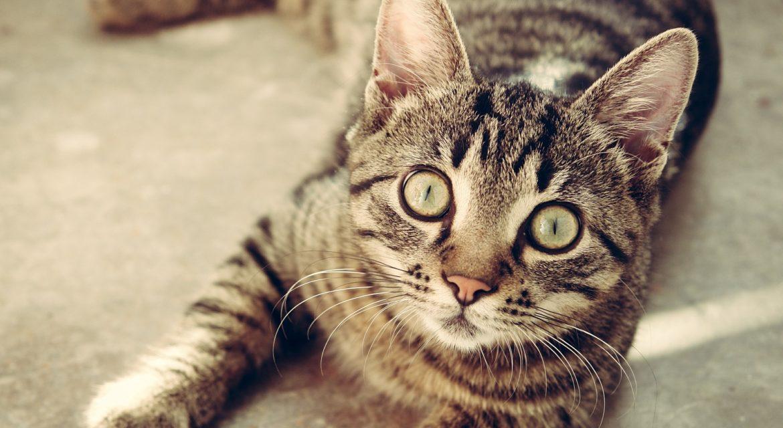 Katzenfutter mit wenig Phosphat