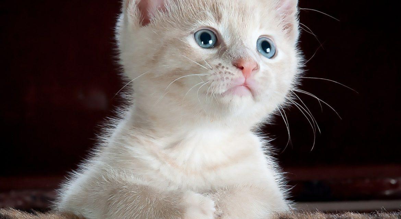 Lachsöl für die Katze – macht diese Nahrungsergänzung Sinn?