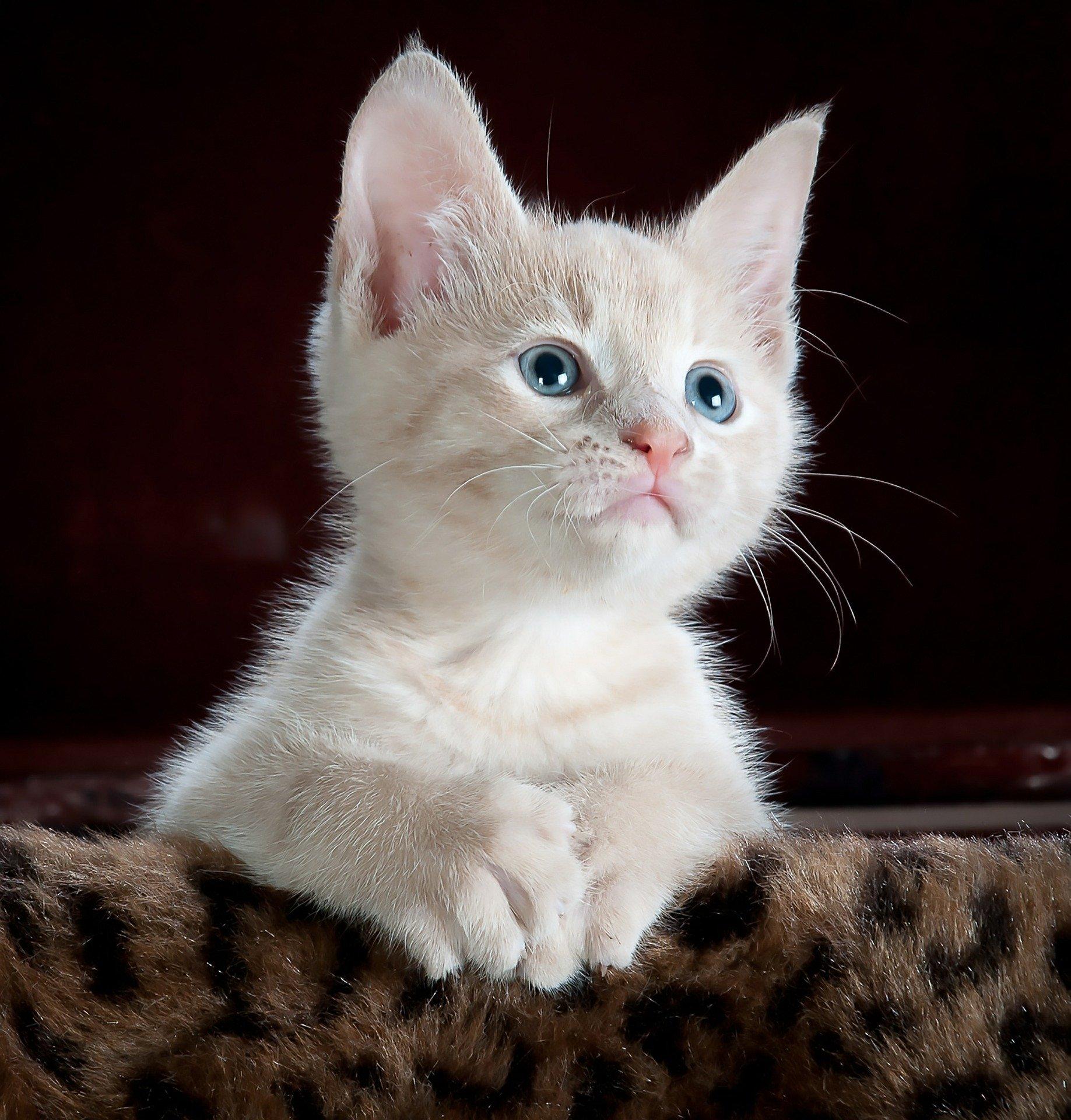 lachsöl für katzen
