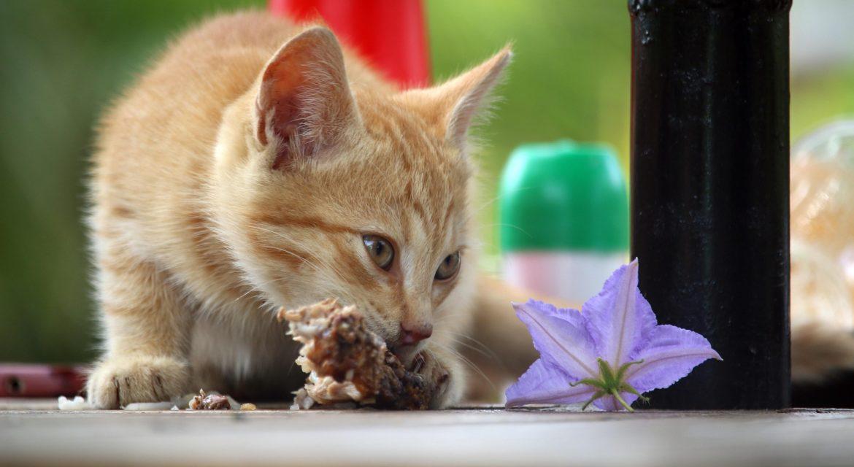Wie sich die Ernährung der Katze auf ihre Gesundheit auswirkt