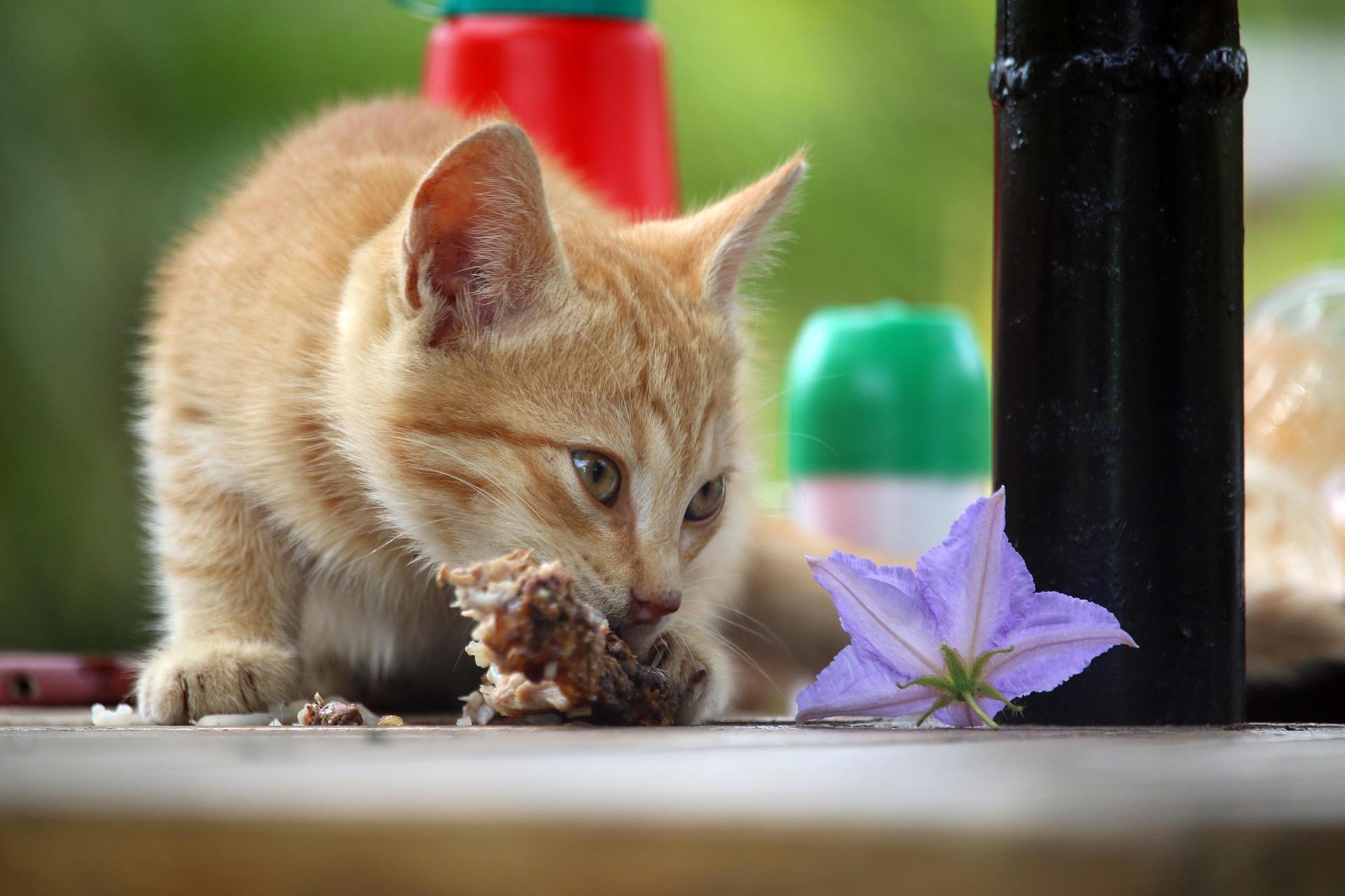 richtige ernährung katzen